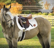 collegiate glamour - saddle pad
