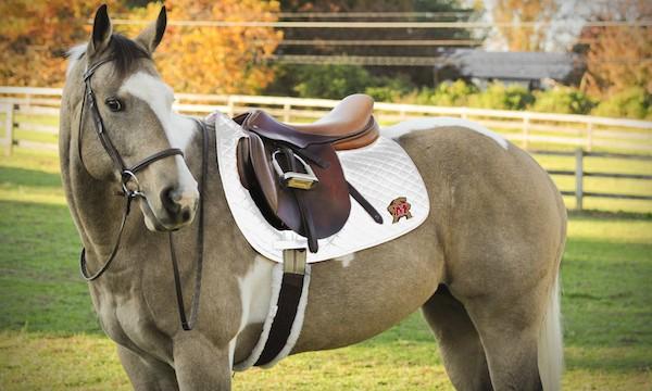 collegiate glamour - saddle pad
