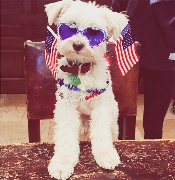 jessicaspringsteen Happy 4th everybody!  getting creative with @emilieee_winterrr #4thofjuly #merica #dogsofinstagram